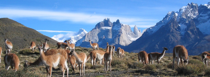 Torres-del-Paine-Animals