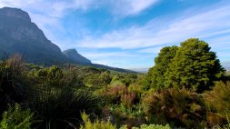 37045-Kirstenbosch-National-Botanical-Garden