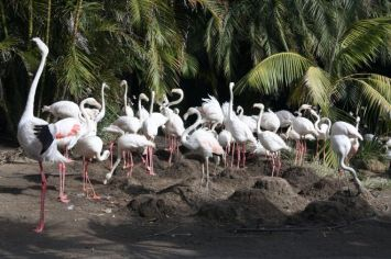 cape_town_world-of-birds_flamingo