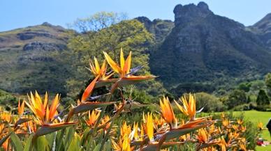 Kirstenbosch 3