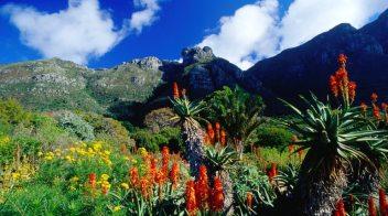 Kirstenbosch-Botanical-Gardens-53-About-Remodel-Attractive-Home-Decoration-Ideas-with-Kirstenbosch-Botanical-Gardens
