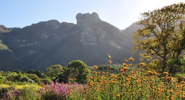 Kirstenbosch-National-Botanical-Garden-A