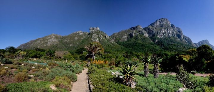 Kirstenbosch-panoramic-view-of-the-mountain-1024x441